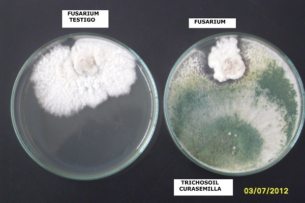 BIOLOGICAL FUNGICIDES