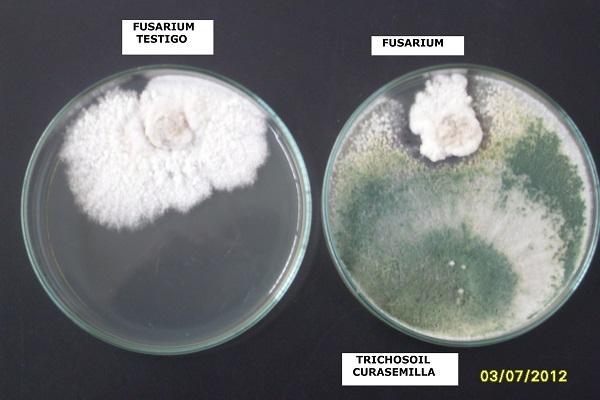 Fungicidas biológicos